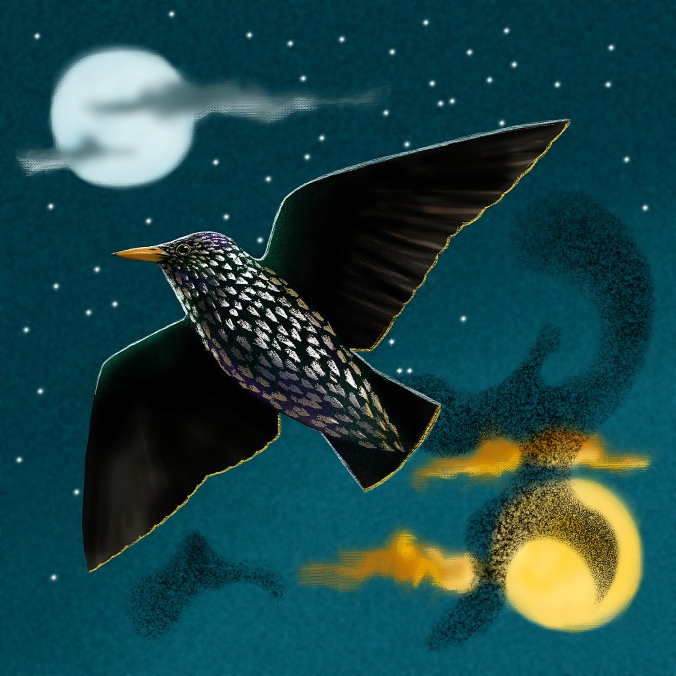 Starling_©_Ross_Gillespie
